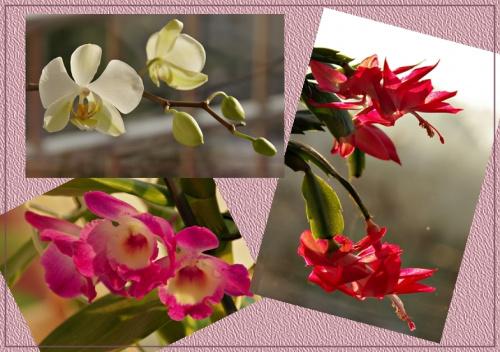 zimowe kwiaty; był jeszcze fiołek i za moment znowu zakwitnie