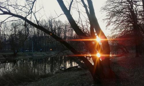 dwa słoneczka