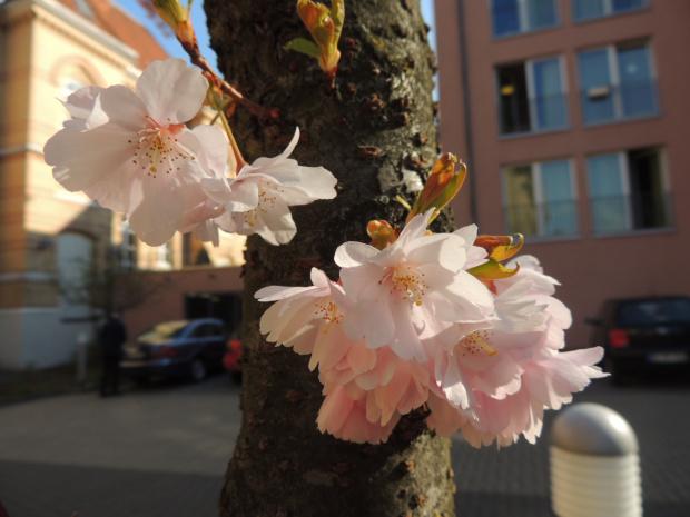 Kwitnący pień drzewa