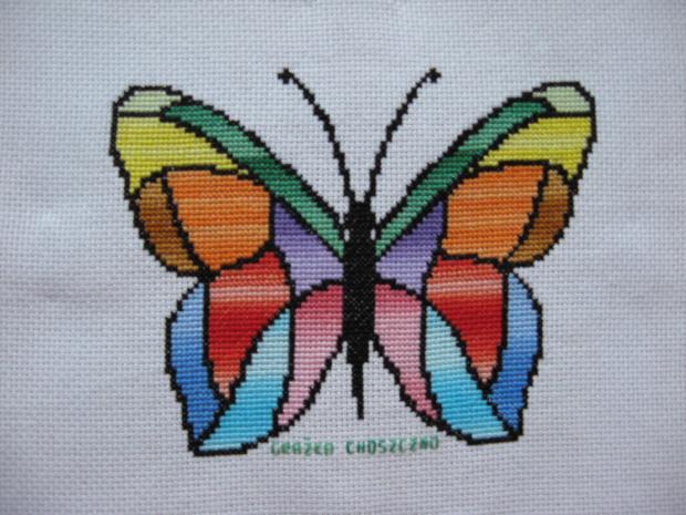 226. Motyl na poduszkę