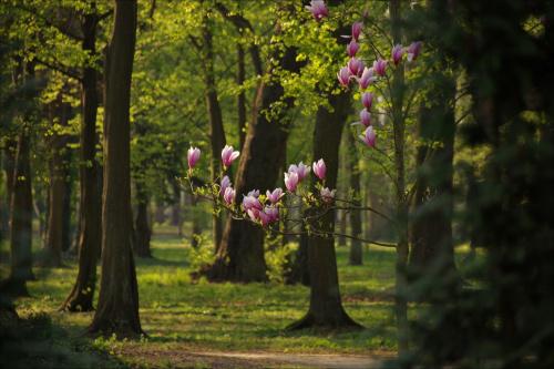 Park w Iłowej Żagańskiej