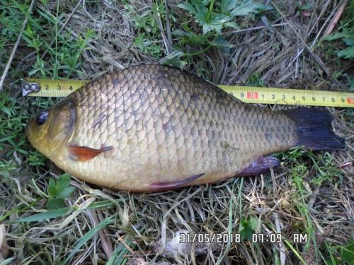 images91.fotosik.pl/20/e2a5924791488286med.jpg