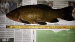 images91.fotosik.pl/24/91028e646e1e1267m.jpg