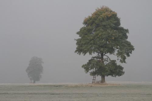 z poprannej mgły