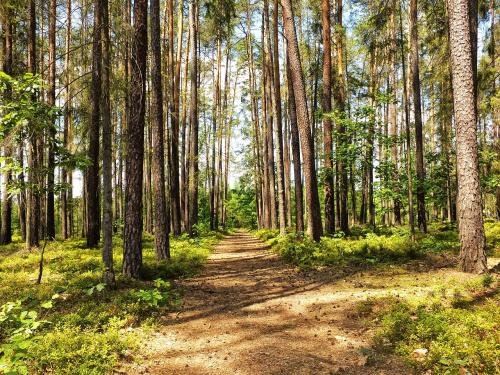 Spacer w lesie to relaks. Cisza wszędzie dookoła..