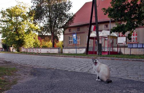 W Bieczu (woj. lubuskie) znajdują się ruiny (niestety) ciekawego pałacu. Wybrałam się tam niedawno. Koty mnie tu witały :)