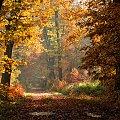 jesienny poranek.:)