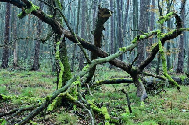 Jesienny bałagan w lesie