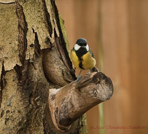 #ptaki #buchfink #zieby #kowaliki #bogatki #natura #przyroda