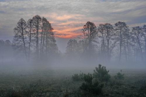 Mgła o poranku