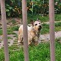 #pies #najlepszyprzyjaciel #dog #bestfriend