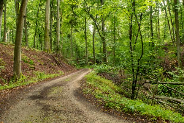 Leśne dukty drogi pełne kadrów