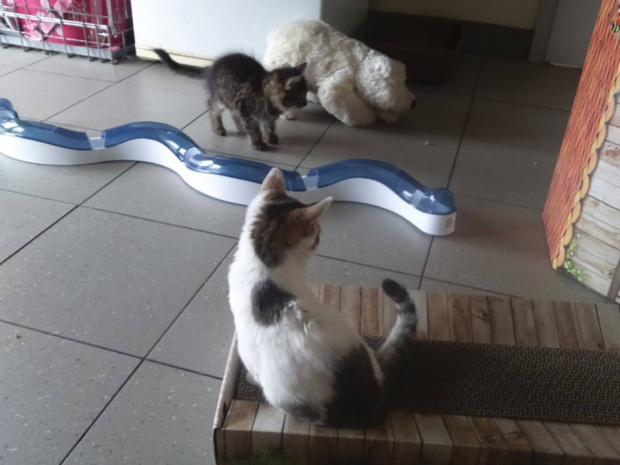 Lola i Ksawery