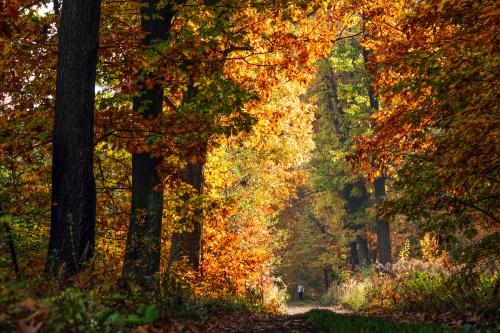 jeszcze raz jesiennie.:)