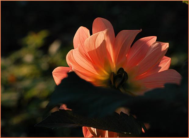 jesiennie ...w moim ogrodzie