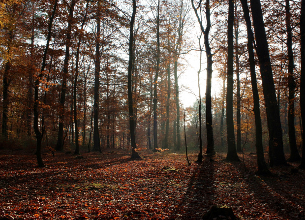 Chodząc leśnymi ścieżkami