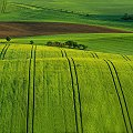 Malowane pola